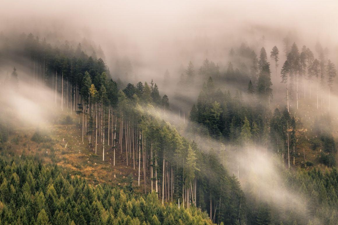 Erdőgazdálkodási támogatásokat hagyott jóvá a kormány