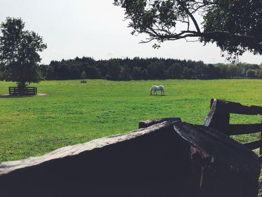 Tánczos Barna: újabb törvény segíti a vidéki birtokok tulajdonjogának rendezését