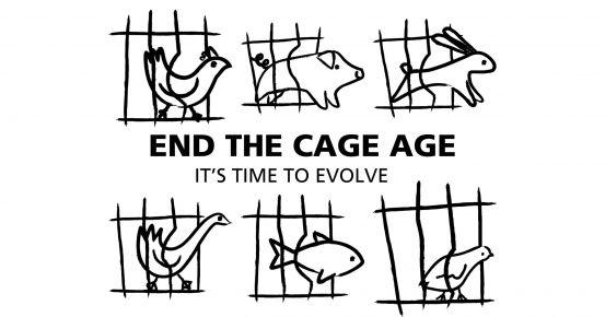 Az állatok jogait védő polgári kezdeményezés esetében jogalkotásról döntött az Európai Bizottság