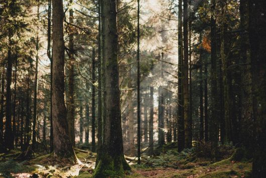 Két sürgősségi kormányrendelet az erdészeti szektor segítésére